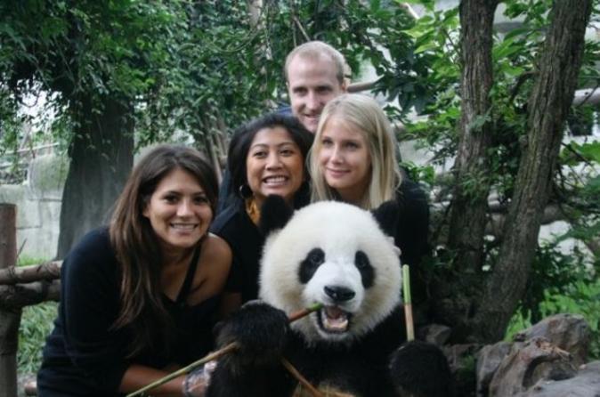 Half day chengdu panda breeding center tour with optional baby panda in chengdu 109098