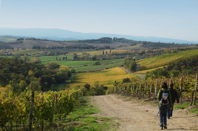 Private tour guided hike in tuscany with transport from siena in siena 116275