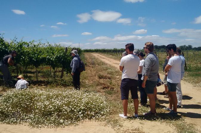 Excursão com degustação de vinhos em Alentejo saindo de Lisboa, incluindo almoço