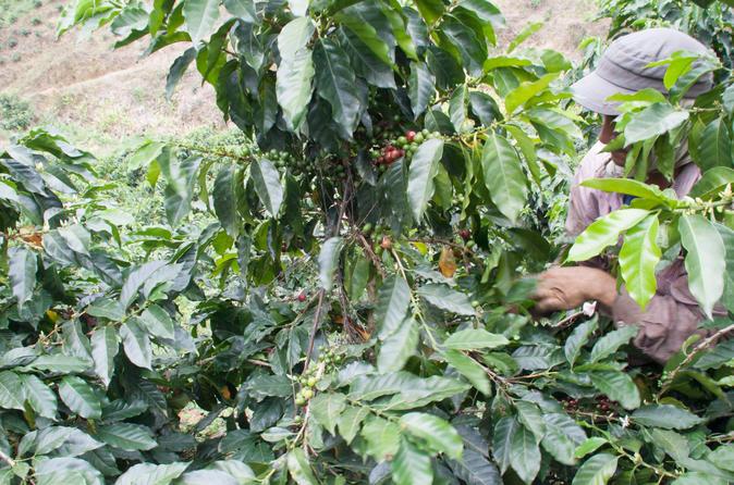 3  Day Trip To Coffee Region From Bogotá - Bogota