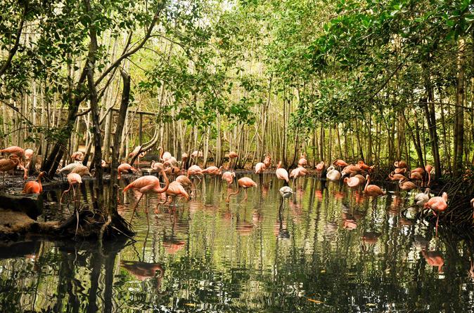Aviary trip from Cartagena