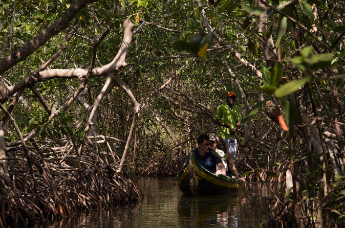 Canoe Trip in the Mangroves