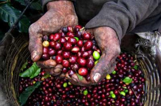Colombian Coffee Tour from Bogotá