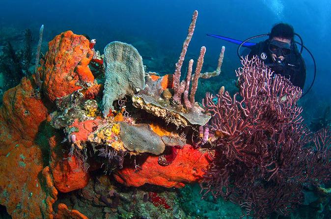 Scuba Diving, Rosario Islands - Cartagena