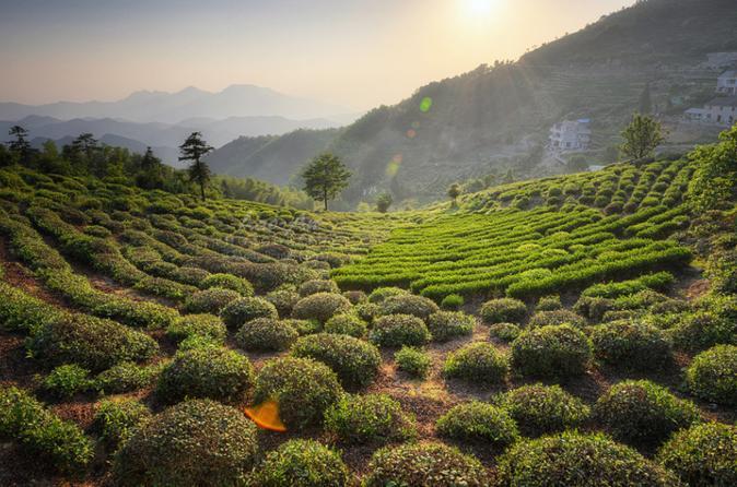 Private Hangzhou Tea Plantation Tour