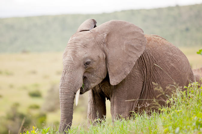 2-Day Western Cape Wildlife Game Drive and Route 62 from Cape Town