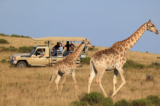 3-Day Garden Route Tour from Cape Town with Game Drive