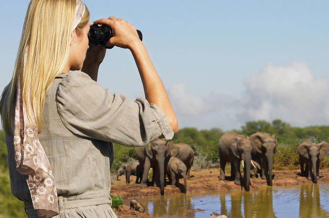 4-Day Addo and Garden Route Safari Guided Tour from Cape Town