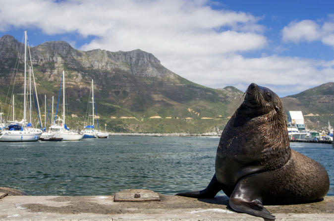 Hout bay cape peninsula and optional boulders beach penguins day trip in cape town 183604