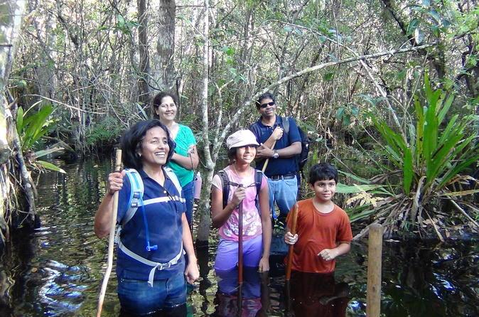 Small-Group Tour: Florida Everglades Swamp Walking Eco-Tour