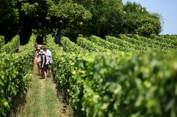 Small group medoc wine tasting and chateaux tour from bordeaux in bordeaux 279070