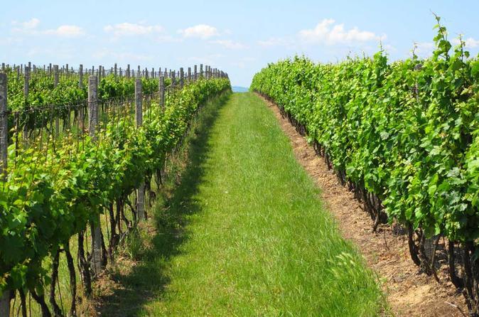 Excursão vinícola particular guiada com degustação e almoço