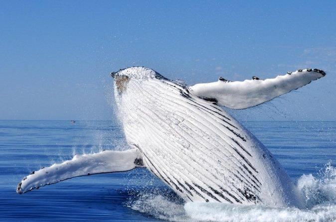 Whale Watching from Augusta in Western Australia