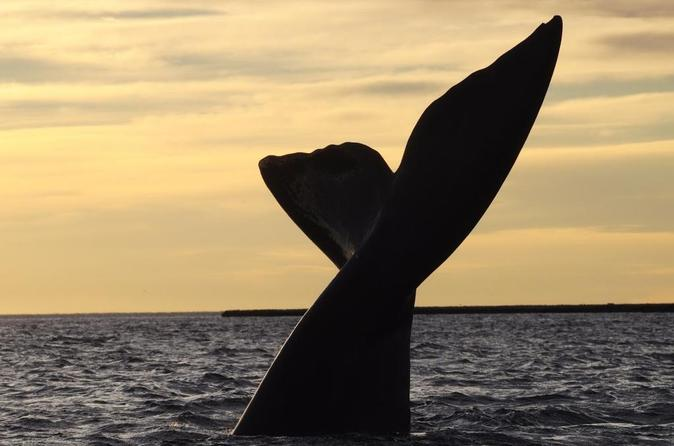 3-Night Tour to Puerto Madryn by Air from Buenos Aires