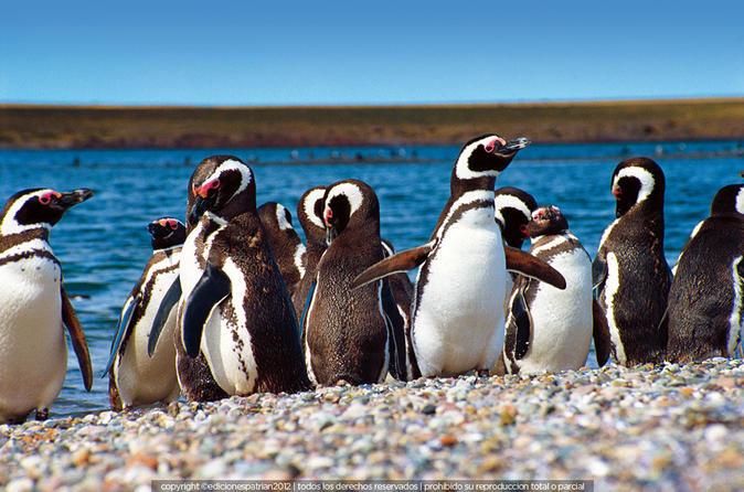 Colônia de pinguins em Punta Tombo e Playa Unión partindo de Puerto Madryn com observação de toninhas opcional