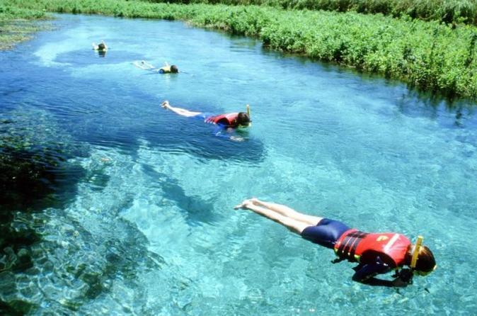 Excursão de mergulho com snorkel no Rio Sucurí partindo de Bonito