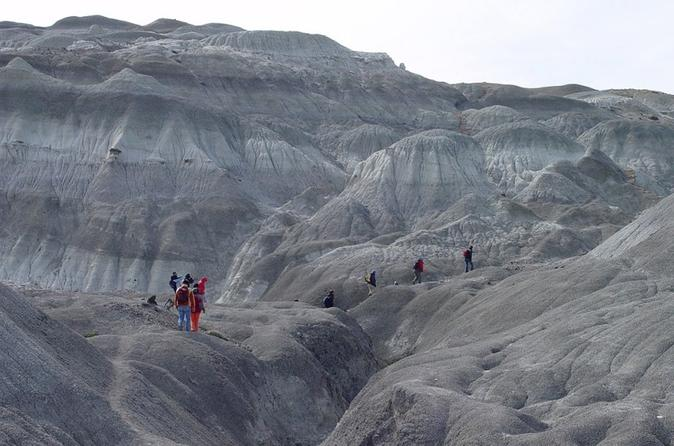 La Leona Petrified Forest Hiking Tour from El Calafate