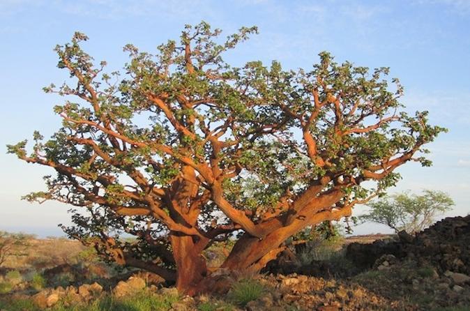 Big Island Dry Forest Preserve Visit