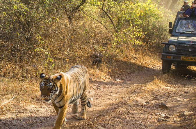 6 night golden triangle private tour and ranthambore wildlife safari in delhi 168245