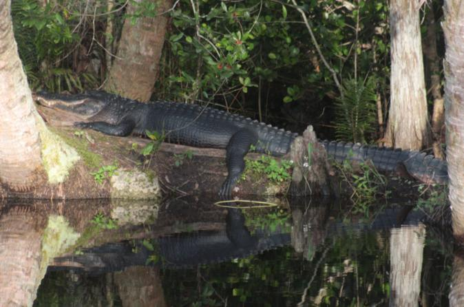 Small-Group Tour: Everglades Family Adventure from Ft Lauderdale