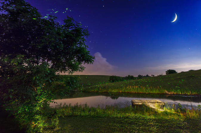 Private Bohol Evening Firefly Watching Cruise