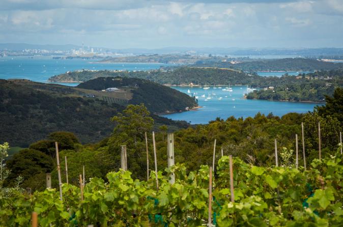 O Melhor de Waiheke: tirolesa, degustação de vinhos e almoço na vinícola