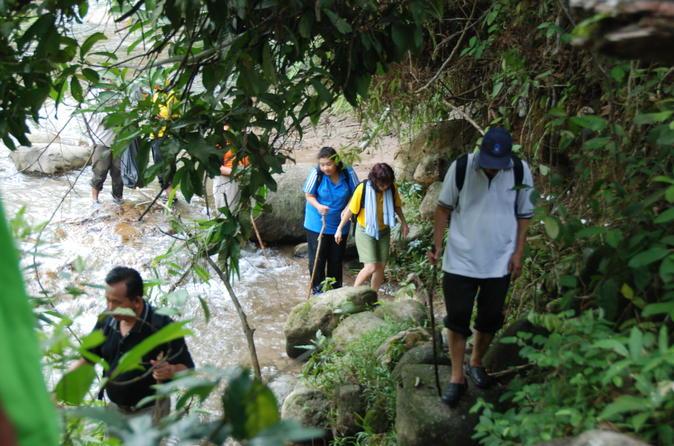 Full day rainforest adventure from kuala lumpur in kuala lumpur 254621