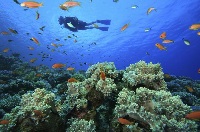 Padi scuba diving in tunku abdul rahman marine park from kota kinabalu in sabah 182243