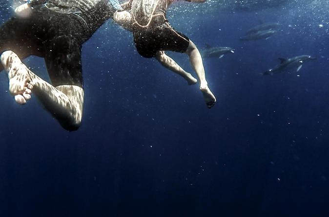 Azores Swim With Dolphins And Snorkel Tour - Ponta Delgada