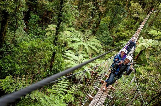 Rotorua forest zipline canopy adventure in rotorua 123837