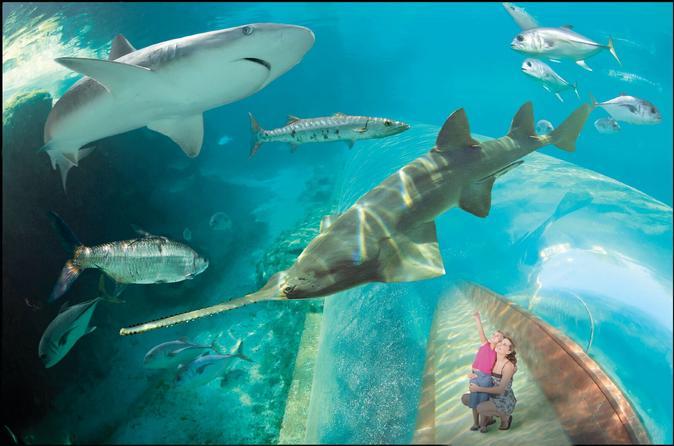 Discover Atlantis