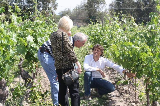 CHILEAN WINE LOVERS IN CASABLANCA VALLEY