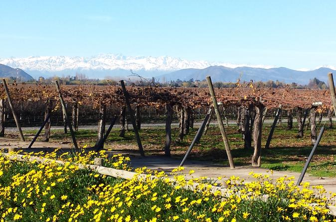 CHILEAN WINE LOVERS IN COLCHAGUA VALLEY