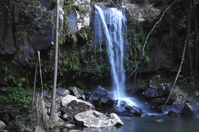 Waterfalls, Rainforest and Glow Worms Mt Tamborine Full Day Tour From Brisbane