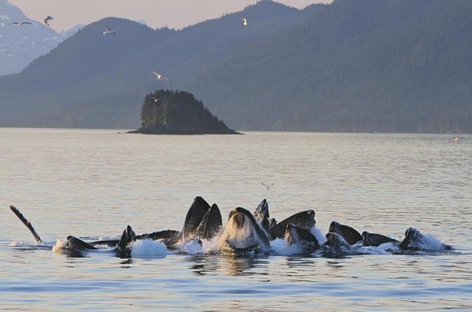 Juneau Whale Watching Tour