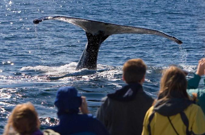 Whale Watching, Mendenhall Glacier, and Tracy's King Crab Shack Combo Tour