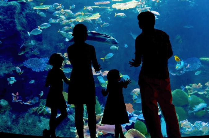 Skip the Line: Inbursa Aquarium in Mexico City