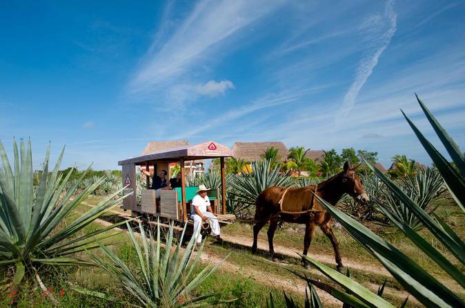 Sotuta de Peon Hacienda Cultural Tour