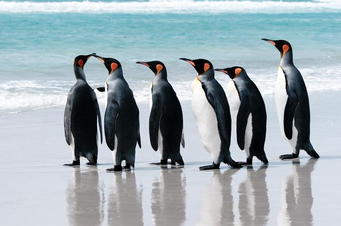 20-Day Cruise from Ushuaia to Antarctica, the Falklands and South Georgia
