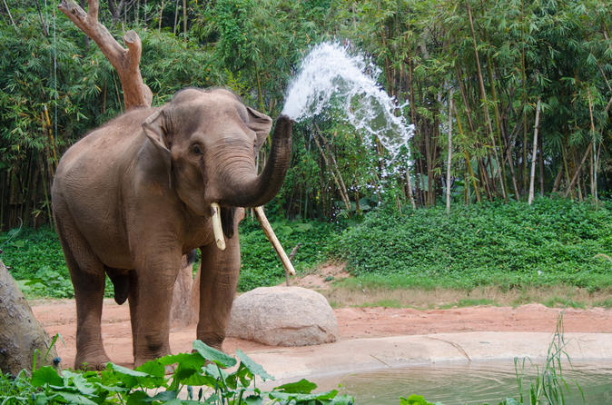 2-Night Chiang Mai Tour Including Elephant Nature Park