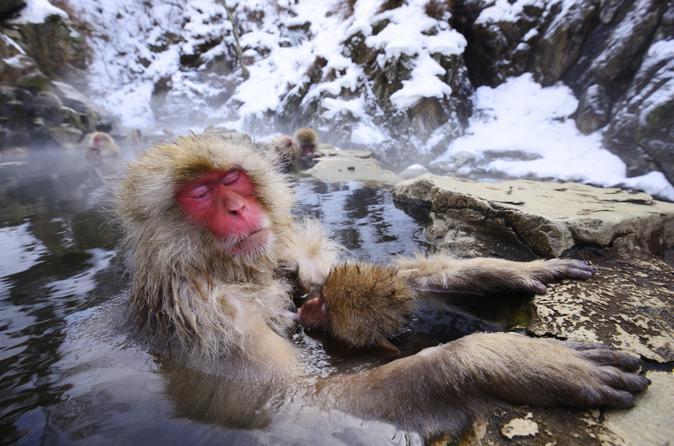 Excursão particular de três dias por Tóquio e Nagano: macaco-japonês, Mercado de Tsukiji e trem-bala