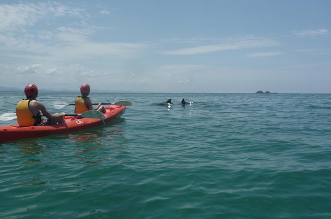 Kayaking with dolphins in byron bay in byron bay 138071