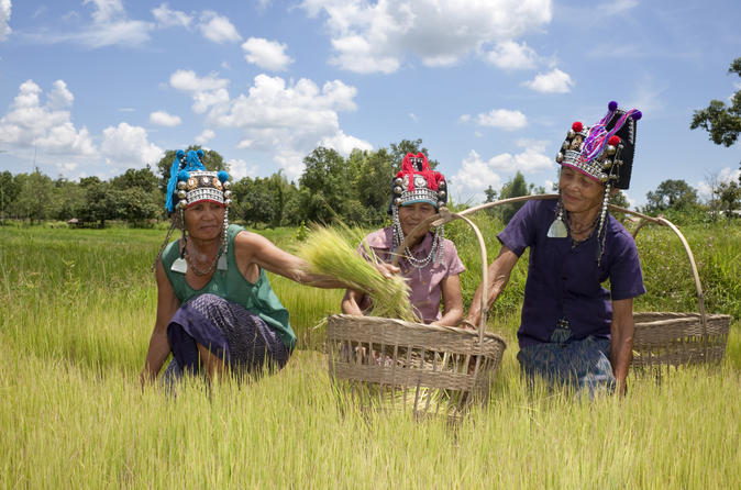 Private tour hill tribe villages and tea plantation from chiang rai in chiang rai 139332