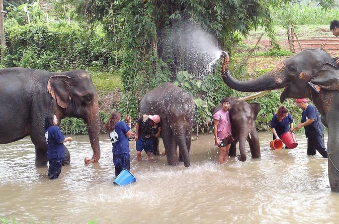 Tong Bai Foundation Elephant Tour from Chiang Mai