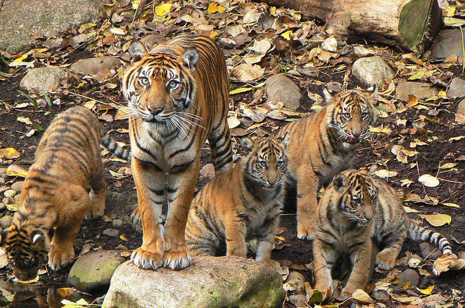 Private Ranthambore Tiger Reserve 3-Day Tour from Delhi