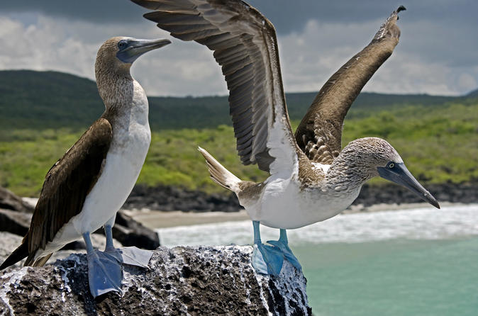The Best of Galapagos Adventure in 7 Days