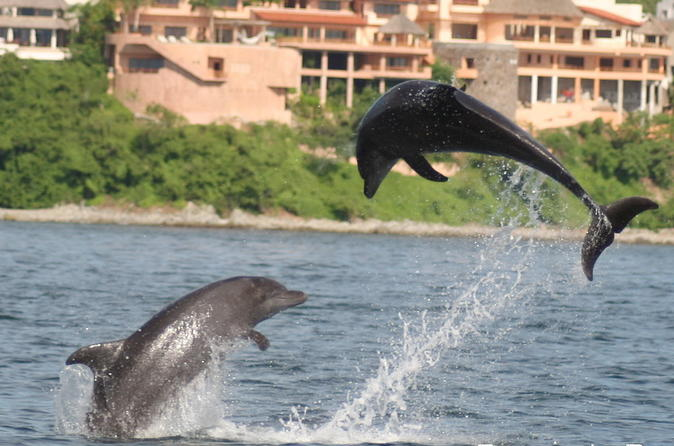 WILD DOLPHINS AND SNORKELING ECOTOURS