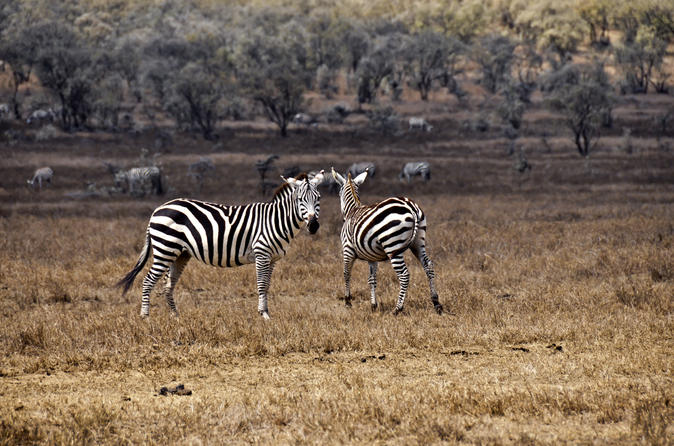 Hell s gate national park walking tour with elsamere conservation in nairobi 137746