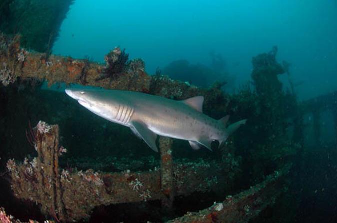 Scuba Shipwreck & Reef Tour for Certified Divers