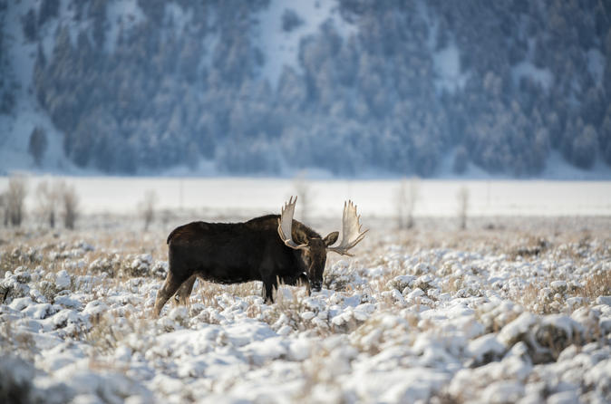 Grand Teton and National Elk Refuge Winter Day Trip